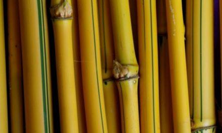 Bambu Gading, Salah Satu Benda Bertuah yang Melegenda